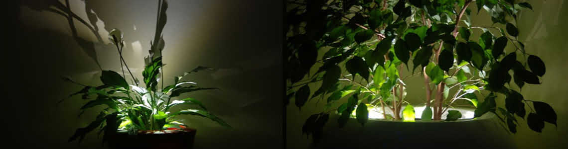 podswietlenie-donicy-anakena