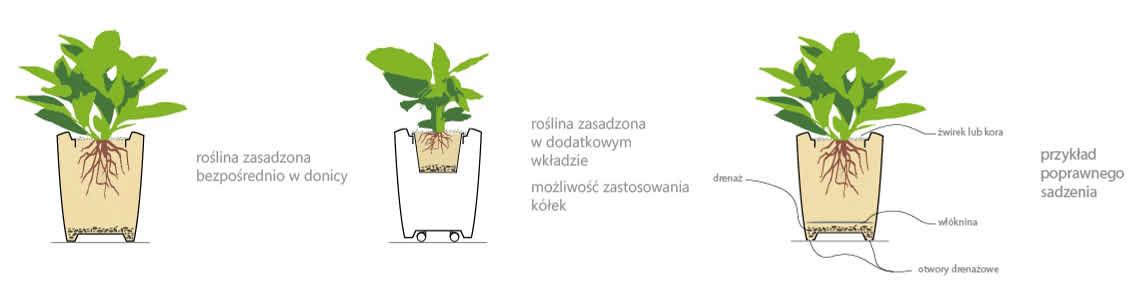 sposob-obsadzania-roslin-w-donicy-anakena